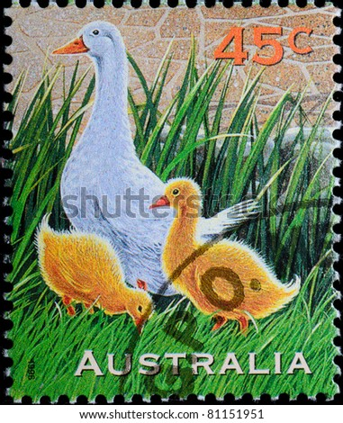 AUSTRALIA - CIRCA 1996: A stamp printed in Australia shows farm animal duck family, circa 1997 - stock photo