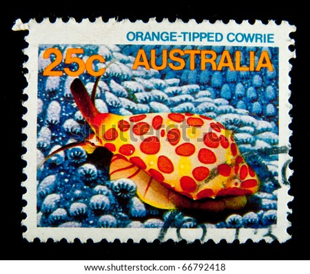 AUSTRALIA - CIRCA 1984: A stamp printed in Australia shows image of a orange-tipped cowrie, series, circa 1984