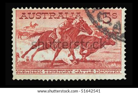 AUSTRALIA - CIRCA 1950s: A stamp printed in Australia showing Northern Territory cattle, circa 1950s