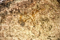 Australia, Northern Territory, Kakadu National Park listed as World Heritage by UNESCO, Ubirr , Aboriginal paintings