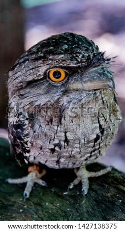 Australian Animals, Reptiles and Birds #1427138375