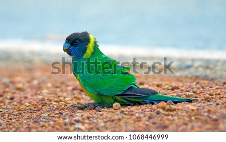 Australian Avian Dinosaurs #1068446999