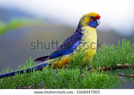 Australian Avian Dinosaurs #1068447005