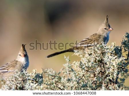 Australian Avian Dinosaurs #1068447008