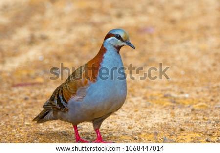 Australian Avian Dinosaurs #1068447014