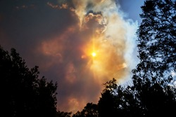 Australian bushfire: trees silhouettes and smoke from bushfires covers the sky and glowing sun barely seen through the smoke. Catastrophic fire danger, NSW, Australia