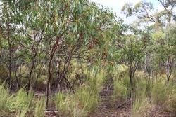 australian bushland and wild grasses
