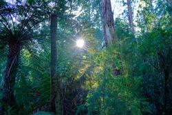 Australian Bushland At Badger Creek , Victoria Australia