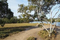Australian bushland river outdoor park
