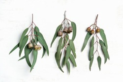 Australian native eucalyptus leaves and flowering gum nuts, photographed on a rustic white background from above.