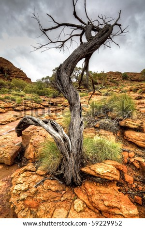 australian outback in northern territory