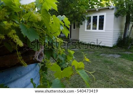 Australian residential backyard with granny flat