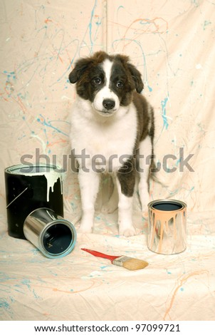 Australian Shepherd and Paint Cans