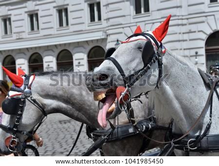 austria  vienna  horse drawn...