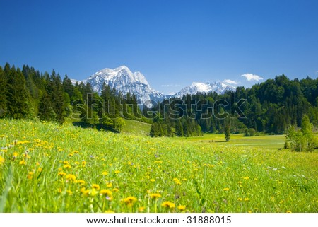 austrian landscape with meadows and mountains in the springtime