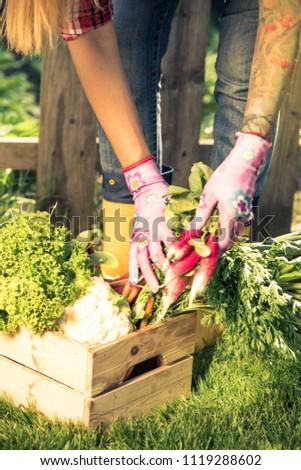 Authentic casual gardener sorting crop in crate box. #1119288602