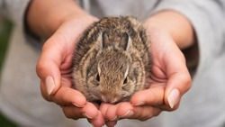 Authentic macro shot of young woman is holding a newborn bunny in her hands. Concept of love for animals, preservation, wildlife, nature, life,protection