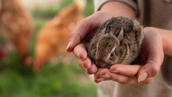 Authentic macro shot of young woman is holding a newborn bunny in her hands on a countryside farm background. Concept of love for animals, preservation, wildlife, nature, agriculture, protection