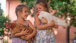 Authentic moment of two happy little smiling girls sisters are holding their hens outside the countryside house in a sunny summer day. Concept: love for animals and nature, agriculture, authenticity