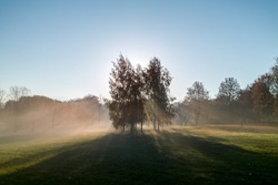 autimn morning rays of light coming through tree leafs and fog