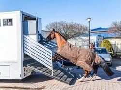Auto trailer for transportation of horses .