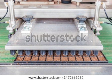 Automated conveyor belt system preparing plant seedlings to be planted in a Dutch greenhouse