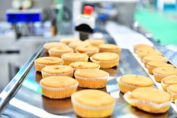 Automatic bakery muffins production line on conveyor belt equipment machinery in  factory, industrial food production.