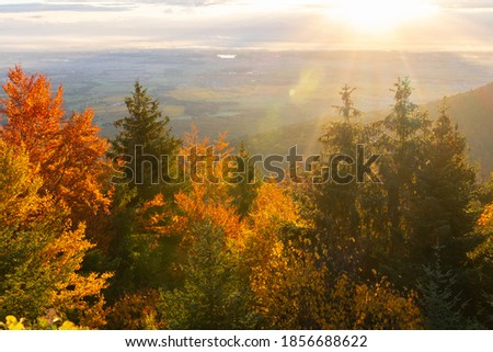 Automn at sunrise in Alsace, France Photo stock ©
