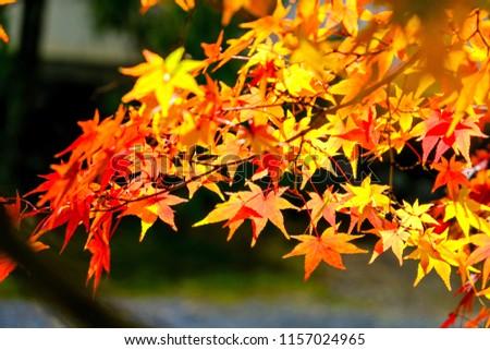 Automn leaves at Tofukuji in Kyoto, japan. Photo stock ©