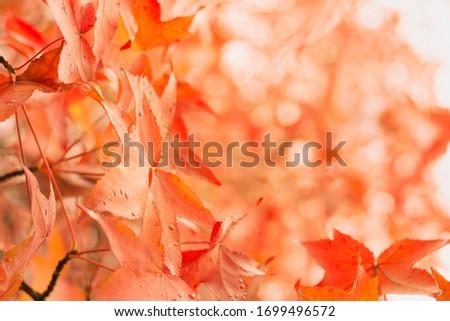 Automn orange leaves background, colorful foliage frame, October colored leaf Photo stock ©