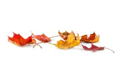 Autum banner with colorful fall leaves falling down from tree. Isolated on white.