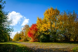 Autum foliage against blue sky and white clouds