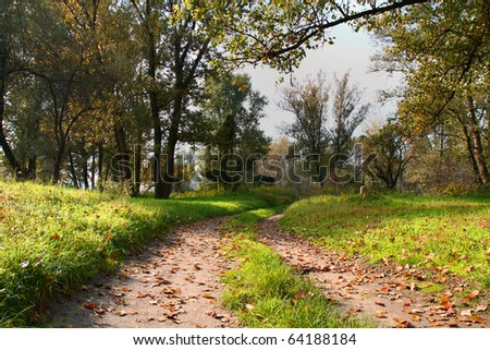 autum forest landscape