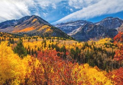 Autum tree colors in the Mount Timpanogos wilderness along the Wasatch Mountains in American Fork Canyon, Utah county.