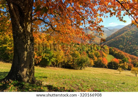 Autum trees and colorful  landscape in the Carpathian mountains. Transylvania,Romania. Europe.