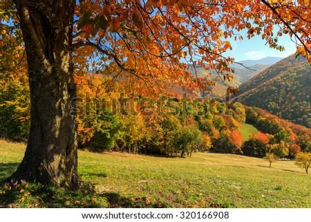 Autum trees and colorful  landscape in the Carpathian mountains. Transylvania,Romania. Europe.
