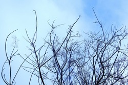 Autum Trees Image with Blue Sky