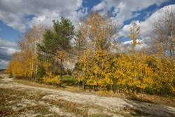Autum woods against the background of blue sky with white clouds. Trees with yellow autum leaves.