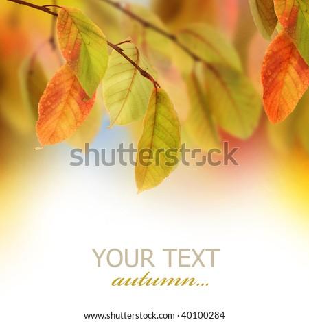 Autumn #40100284