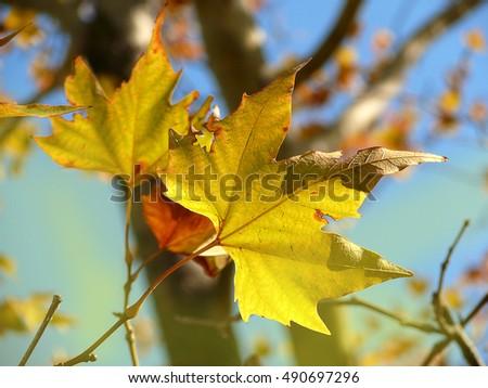 autumn #490697296