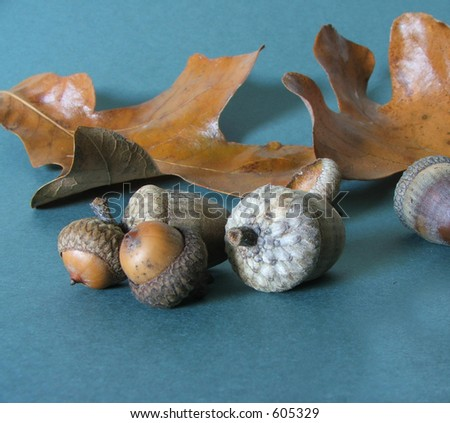 Autumn acorns with a fallen leaf, on forest green background.