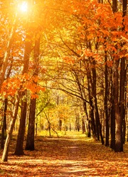 Autumn alley in a park multi-colored trees branches in sunny forest. Autumn city park nature scene fall tree colorful leaves. beautiful fall park.