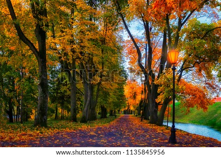 Autumn alley in park. Landscape of amazing autumn colorful alley with yellow and red trees. Path between trees covered colored leaves. Fall in park. Scenery of beautiful colors of autumn nature