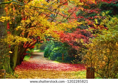 Autumn alley in the fog with trees and orange fallen leaves.