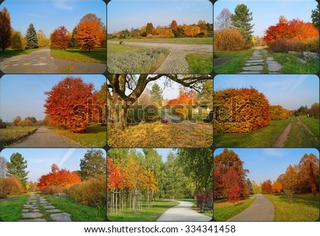 Autumn alley in the park - Autumn alley in the park - photo collage - Shutterstock ID 334341458