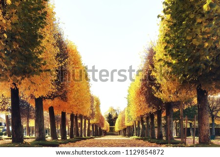 autumn alley in the park / autumn walk in the city park, weekends alone. The concept of calm and autumn freshness among trees and branches with yellow leaves #1129854872