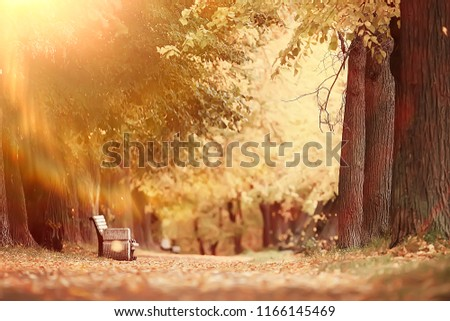 autumn alley in the park / autumn walk in the city park, weekends alone. The concept of calm and autumn freshness among trees and branches with yellow leaves #1166145469