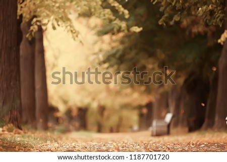 autumn alley in the park / autumn walk in the city park, weekends alone. The concept of calm and autumn freshness among trees and branches with yellow leaves #1187701720
