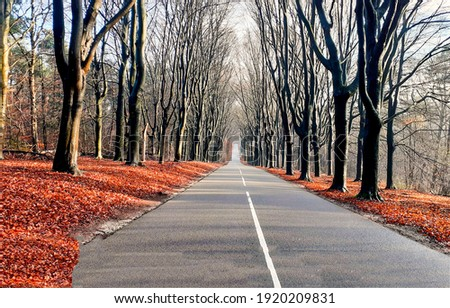 Autumn alley road. Forest road in autumn. Road in forest. Autumn forest road view