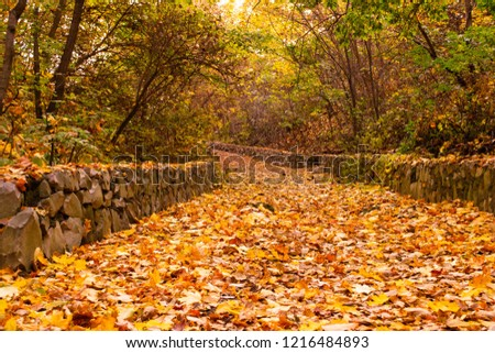 autumn alley with trees defoliation